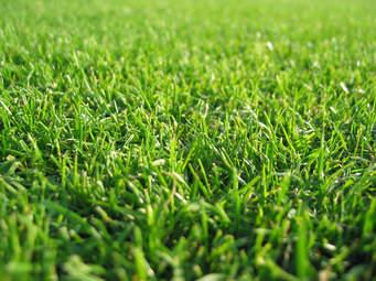Vysychá Vám trávnik, alebo sa ho chytá  pleseň? Tu je jednoduché, ekologické riešenie.